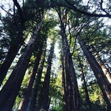 Redwood Regional Park 7867 Redwood Rd Image