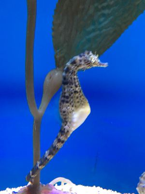 Ripley's Aquarium of Myrtle Beach 1110 Celebrity Cir Image
